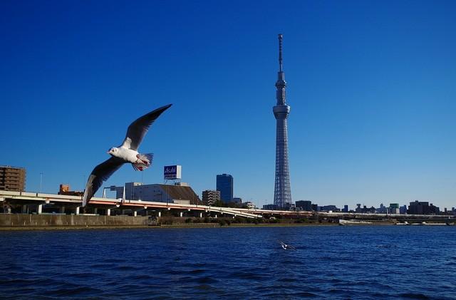【愛鳥週間】県鳥の画像を貼ってくの画像37枚目!