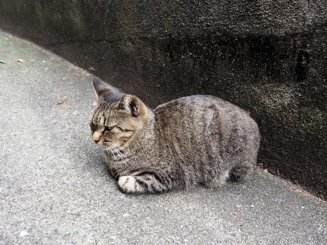 撮り貯まった猫の画像86枚目!