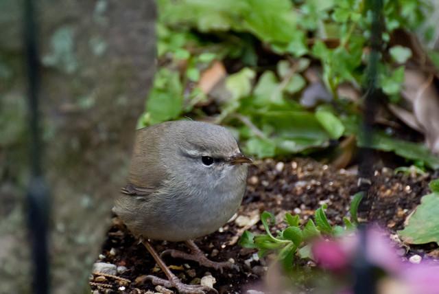 【愛鳥週間】県鳥の画像を貼ってくの画像61枚目!