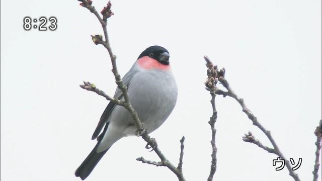 冬の鳥スレ<br />この季節に一度は見る鳥<br />スレ画はハクセキレイの画像10枚目!