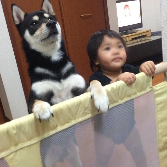 駄犬「ごすずん」の画像3枚目!