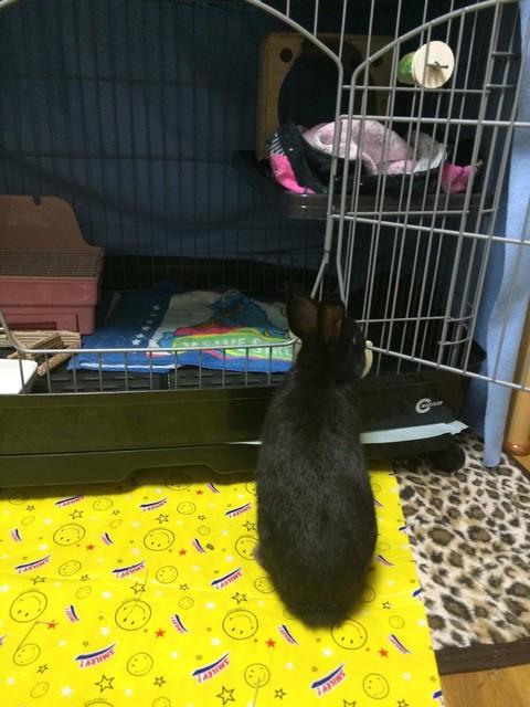 うちのウサギさんの写真うpしますの画像7枚目!