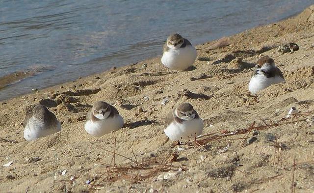 【愛鳥週間】県鳥の画像を貼ってくの画像71枚目!