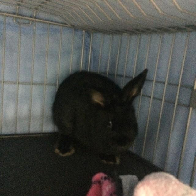 うちのウサギさんの写真うpしますの画像2枚目!
