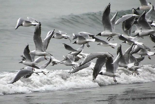 【愛鳥週間】県鳥の画像を貼ってくの画像39枚目!