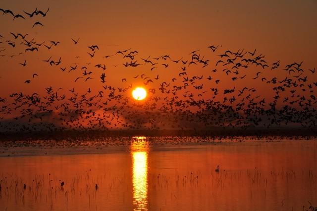 【愛鳥週間】県鳥の画像を貼ってくの画像12枚目!
