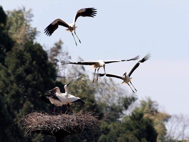 【愛鳥週間】県鳥の画像を貼ってくの画像83枚目!
