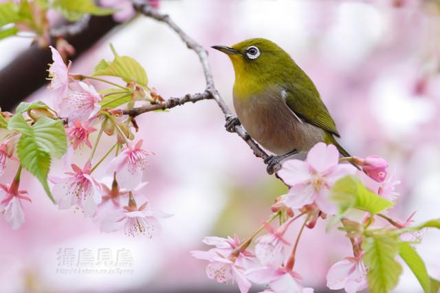 【愛鳥週間】県鳥の画像を貼ってくの画像87枚目!