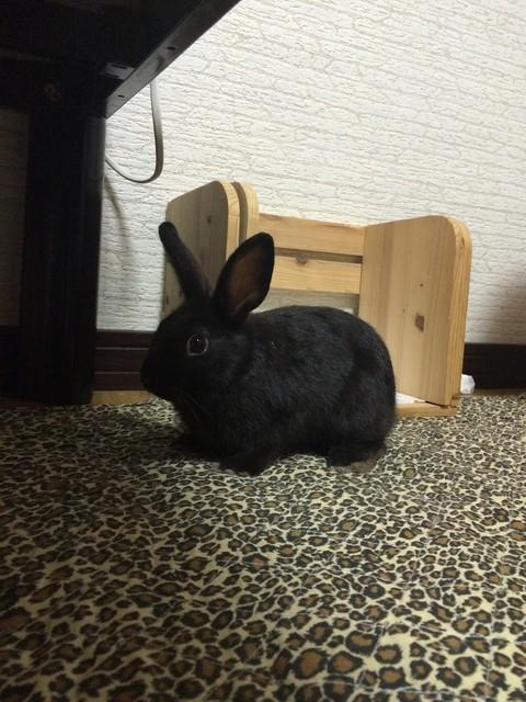 うちのウサギさんの写真うpしますの画像1枚目!