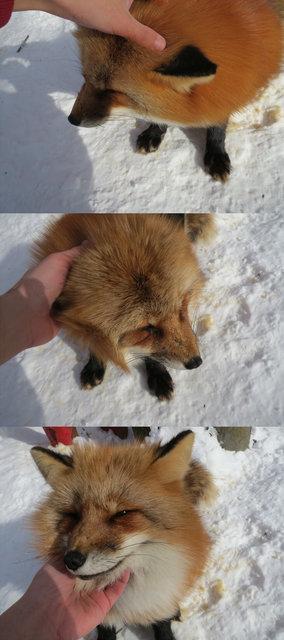 九尾の狐が一番位の高い妖狐かとの画像14枚目!
