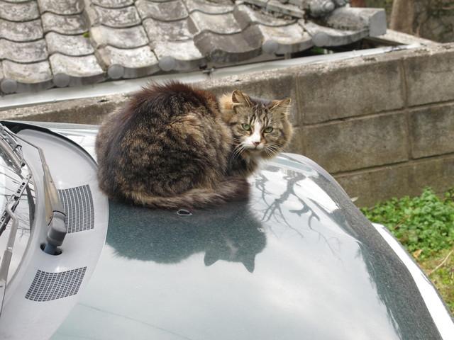 撮り貯まった猫の画像94枚目!