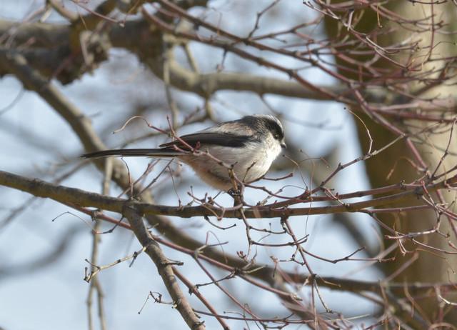 冬の鳥スレ<br />この季節に一度は見る鳥<br />スレ画はハクセキレイの画像5枚目!