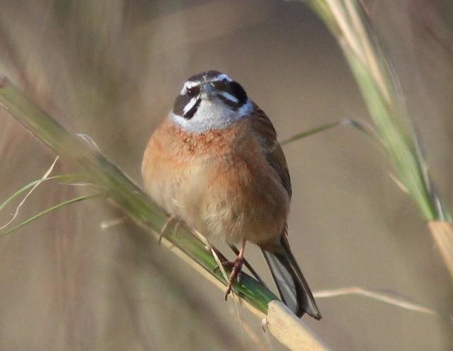 【愛鳥週間】県鳥の画像を貼ってくの画像34枚目!