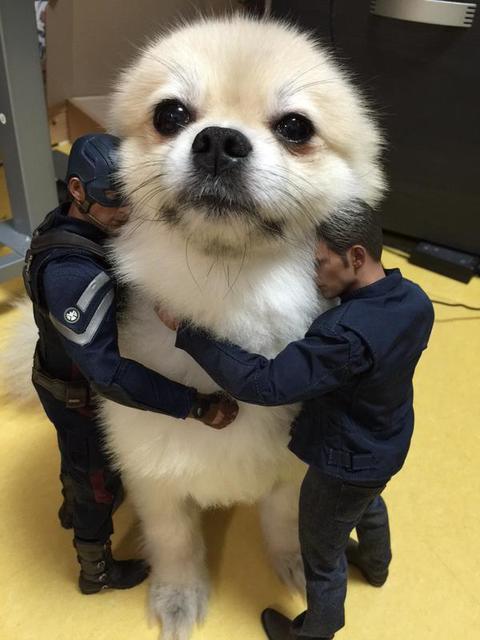 駄犬「ごすずん」の画像35枚目!