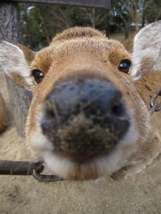 鹿が鎖噛んでる画像集めたの画像21枚目!