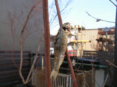 冬の鳥スレ<br />この季節に一度は見る鳥<br />スレ画はハクセキレイの画像28枚目!