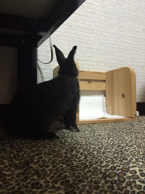 うちのウサギさんの写真うpしますの画像14枚目!