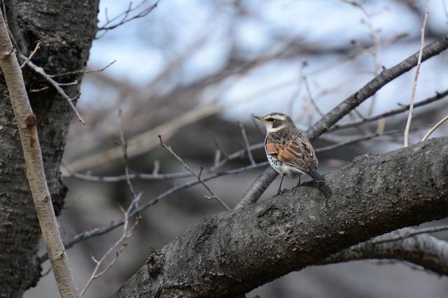 冬の鳥スレ<br />この季節に一度は見る鳥<br />スレ画はハクセキレイの画像21枚目!