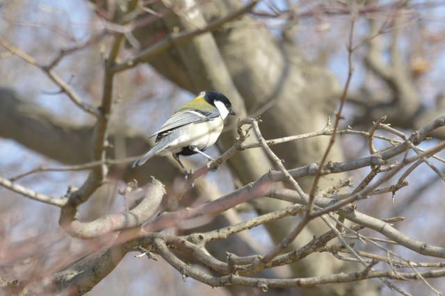 冬の鳥スレ<br />この季節に一度は見る鳥<br />スレ画はハクセキレイの画像4枚目!