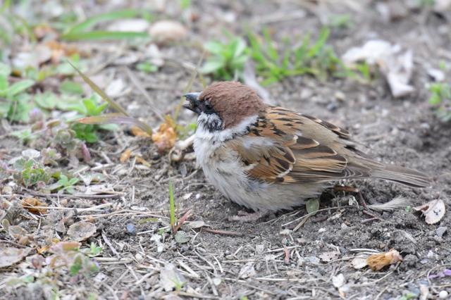 冬の鳥スレ<br />この季節に一度は見る鳥<br />スレ画はハクセキレイの画像16枚目!
