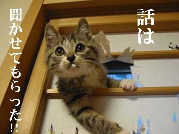 猫の画像48枚目!