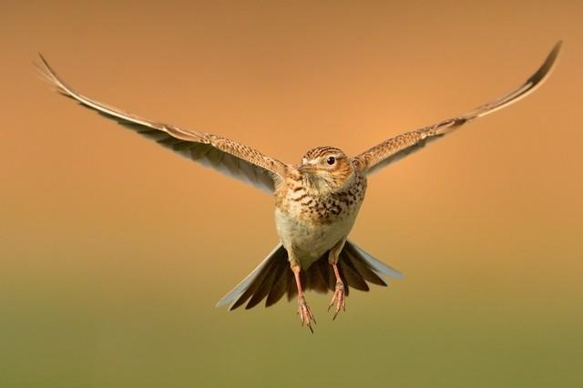 【愛鳥週間】県鳥の画像を貼ってくの画像26枚目!