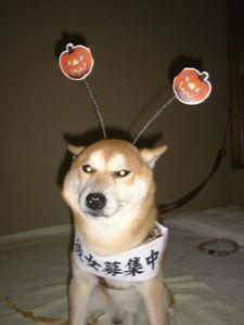 駄犬「ごすずん」の画像19枚目!