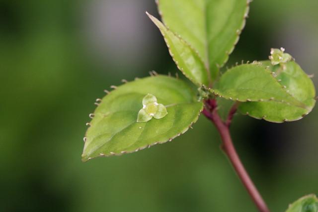キモい植物の画像20枚目!