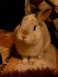 うちのウサギさんの写真うpします