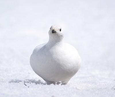 冬の鳥スレ<br />この季節に一度は見る鳥<br />スレ画はハクセキレイの画像13枚目!