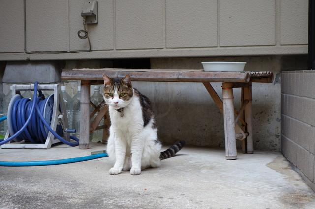 撮り貯まった猫の画像71枚目!