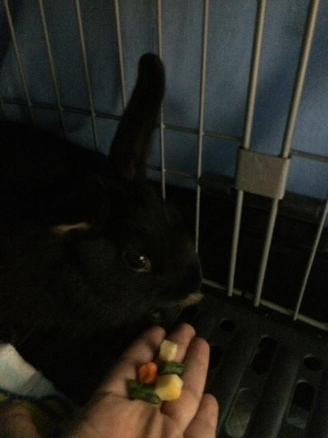 うちのウサギさんの写真うpしますの画像11枚目!