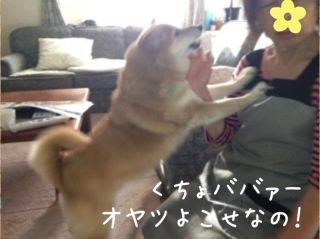 駄犬「ごすずん」の画像36枚目!