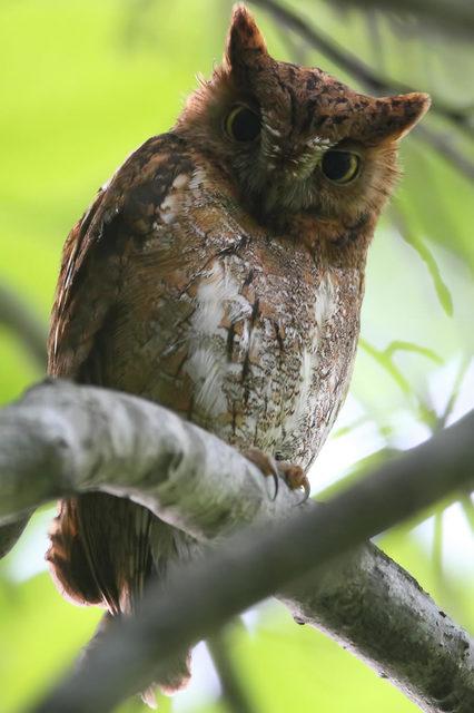 【愛鳥週間】県鳥の画像を貼ってくの画像66枚目!