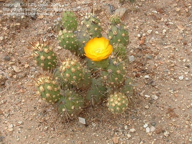 キモい植物の画像12枚目!