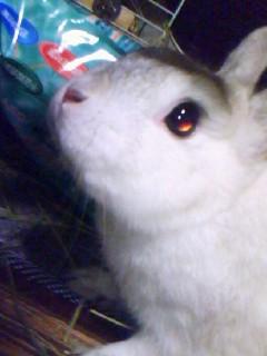 うちのウサギさんの写真うpしますの画像16枚目!