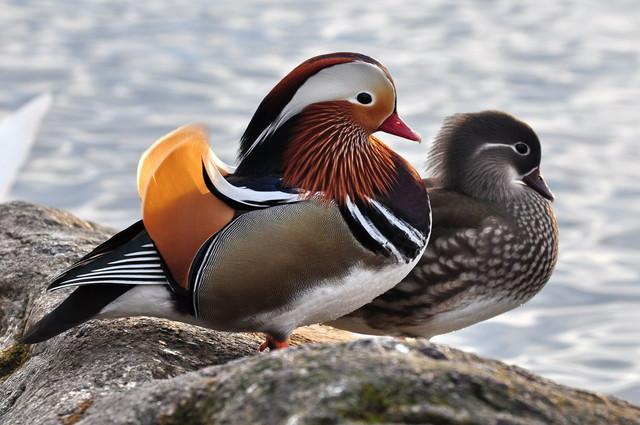【愛鳥週間】県鳥の画像を貼ってくの画像18枚目!