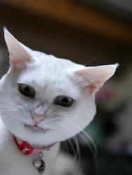 猫の画像44枚目!