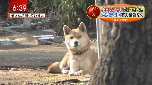 駄犬「ごすずんさむいんだけど」の画像29枚目!