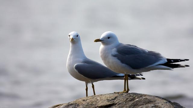 【愛鳥週間】県鳥の画像を貼ってくの画像42枚目!
