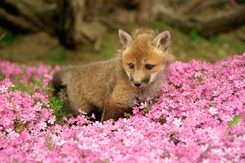 九尾の狐が一番位の高い妖狐かとの画像15枚目!
