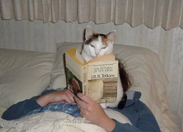 猫の画像52枚目!