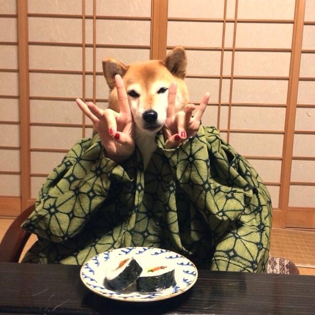 駄犬「ごすずん」の画像10枚目!
