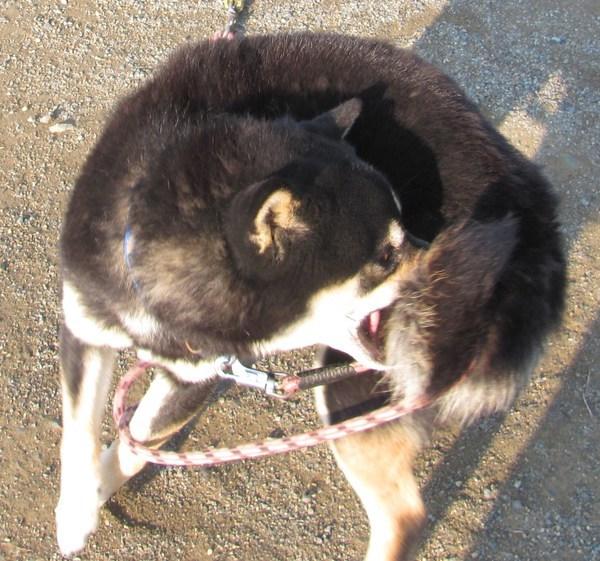 駄犬「ごすずん」の画像22枚目!