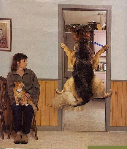 犬の画像33枚目!
