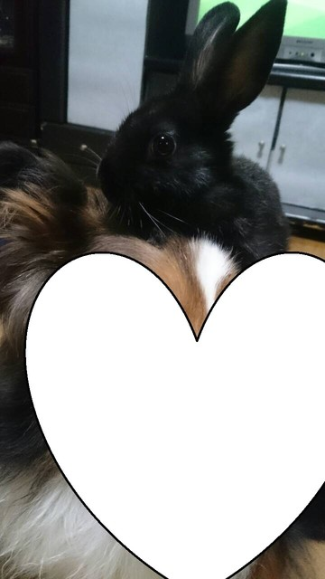 うちのウサギさんの写真うpしますの画像13枚目!