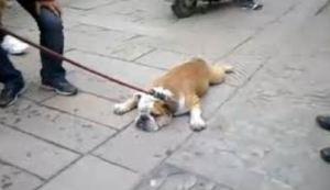 犬の画像41枚目!