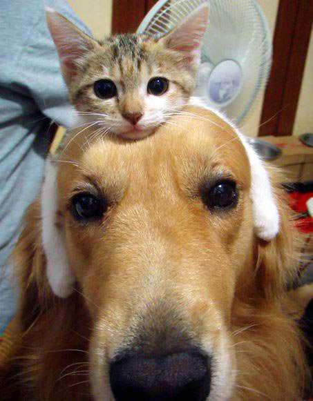 ネコとイヌはどっちが可愛いのかの画像1枚目!