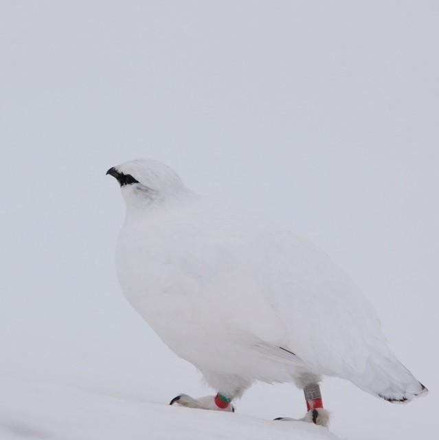 【愛鳥週間】県鳥の画像を貼ってくの画像49枚目!