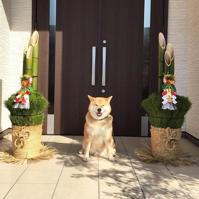 駄犬「ごす……じゅんびばんたんだな」の画像1枚目!